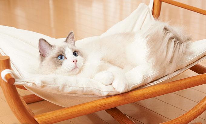 【話題の商品】ふわふわ雲の上のような愛猫お昼寝ハンモック
