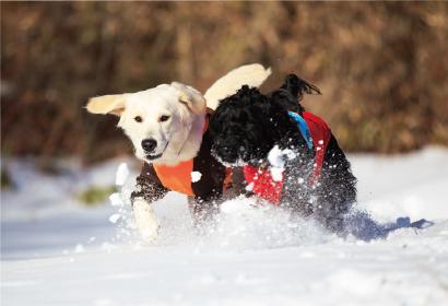 わんちゃんと一緒に雪遊びをしたい!【関東編】