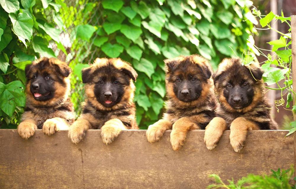 3月23日は子犬の日!National Puppy Day♪