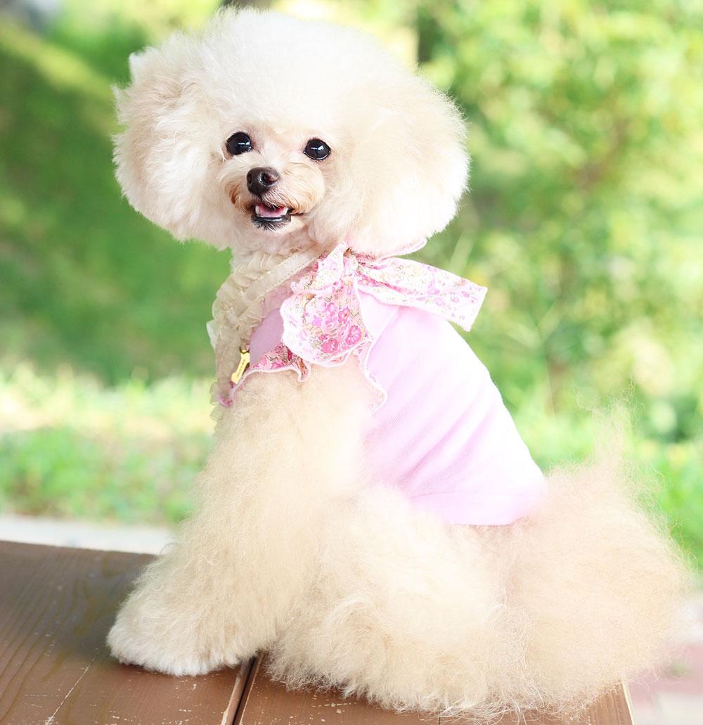 愛犬とお花見をしたい♪おすすめお花見スポット!東海編