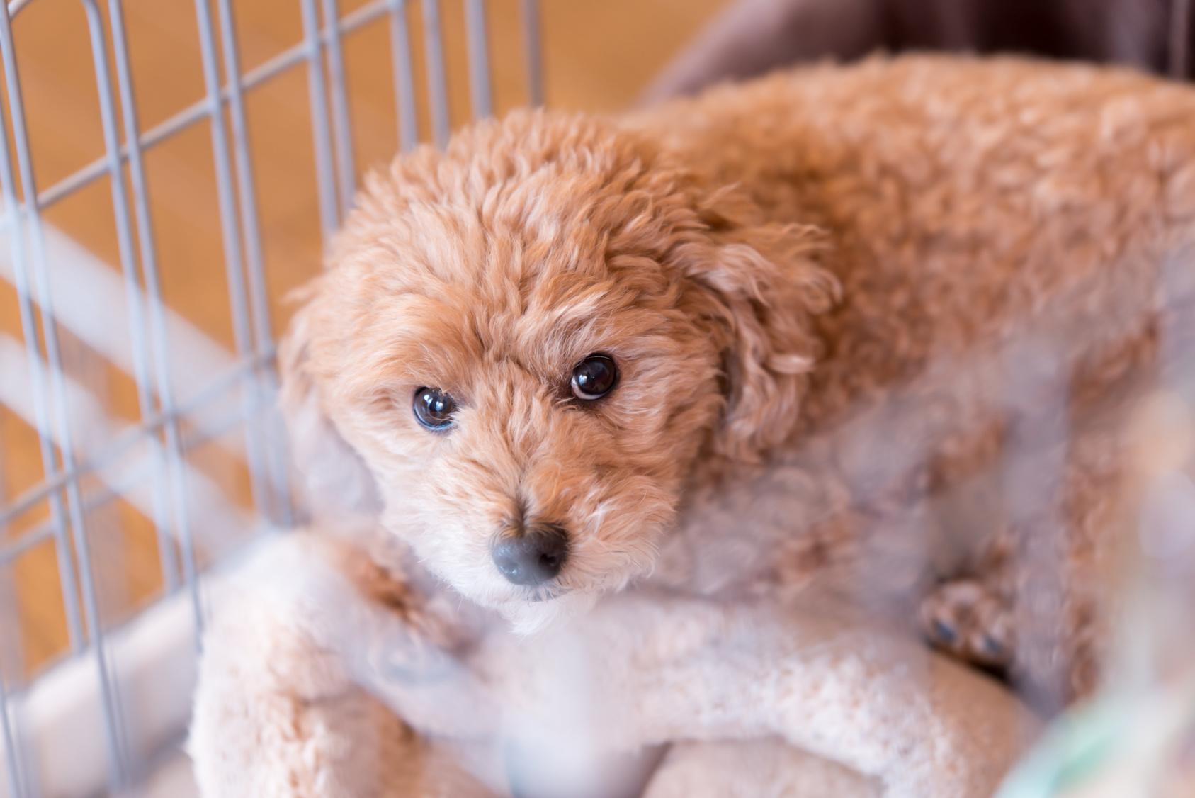 災害があった場合、あなたは愛犬の命を守れますか?