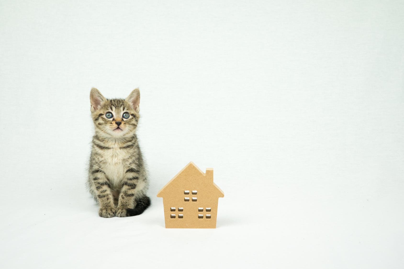 災害があった場合、あなたは愛猫の命を守れますか?