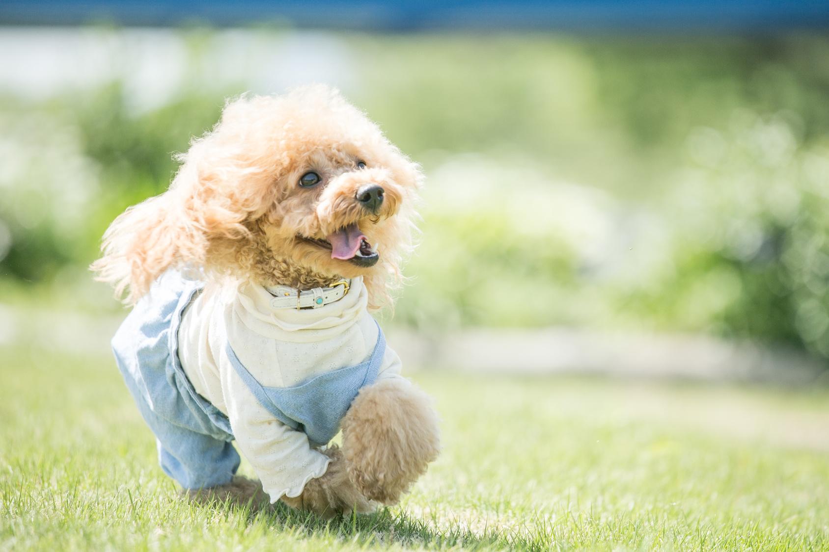 予約必見!インターペット後に愛犬と一緒に行きたいおすすめランチスポット♪