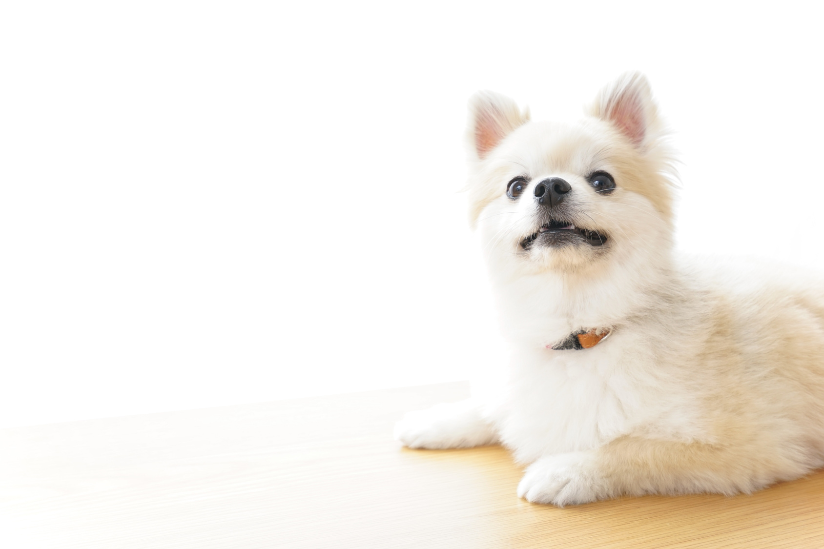 犬の問題行動とは?問題行動をやめさせるポイント