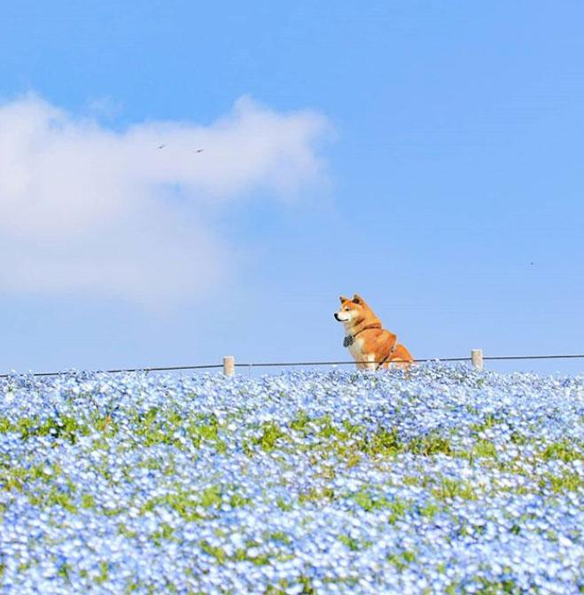 GW(ゴールデンウィーク)に愛犬と行きたい!No.1おすすめお出かけスポットはひたち海浜公園♪