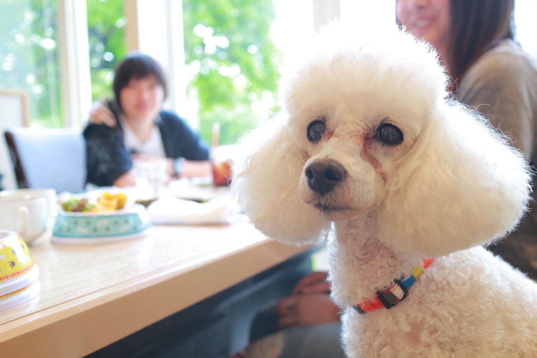 愛犬と一緒に焼き肉を楽しもう♪【うしすけ全店で使えるお得なクーポン配布中】
