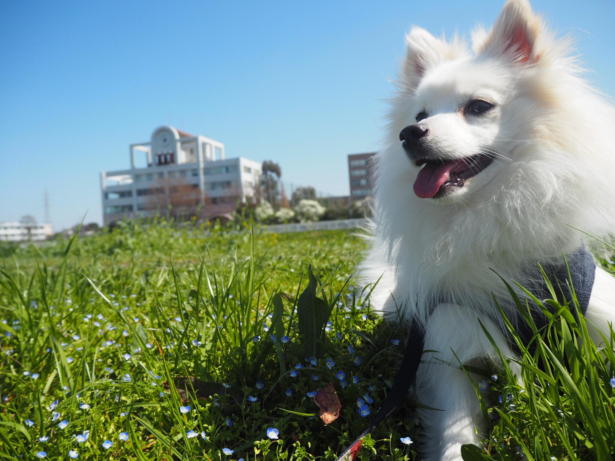 GW(ゴールデンウィーク)に愛犬と一緒に旅行に行きたい!飛行機や新幹線って愛犬は乗車できるの?