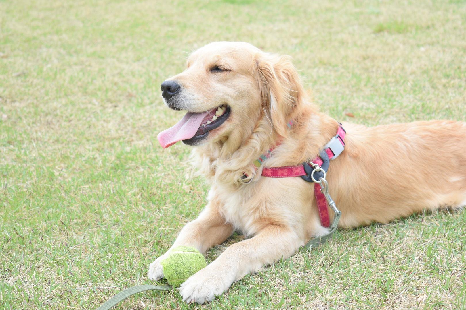 GW(ゴールデンウィーク)に愛犬と一緒に旅行に行きたい!旅先でこんな症状が出た場合はどうすれば良い?