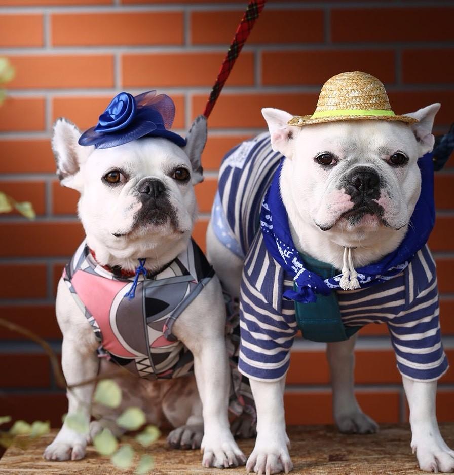 GW(ゴールデンウィーク)に愛犬と一緒に旅行に行きたい!大阪編