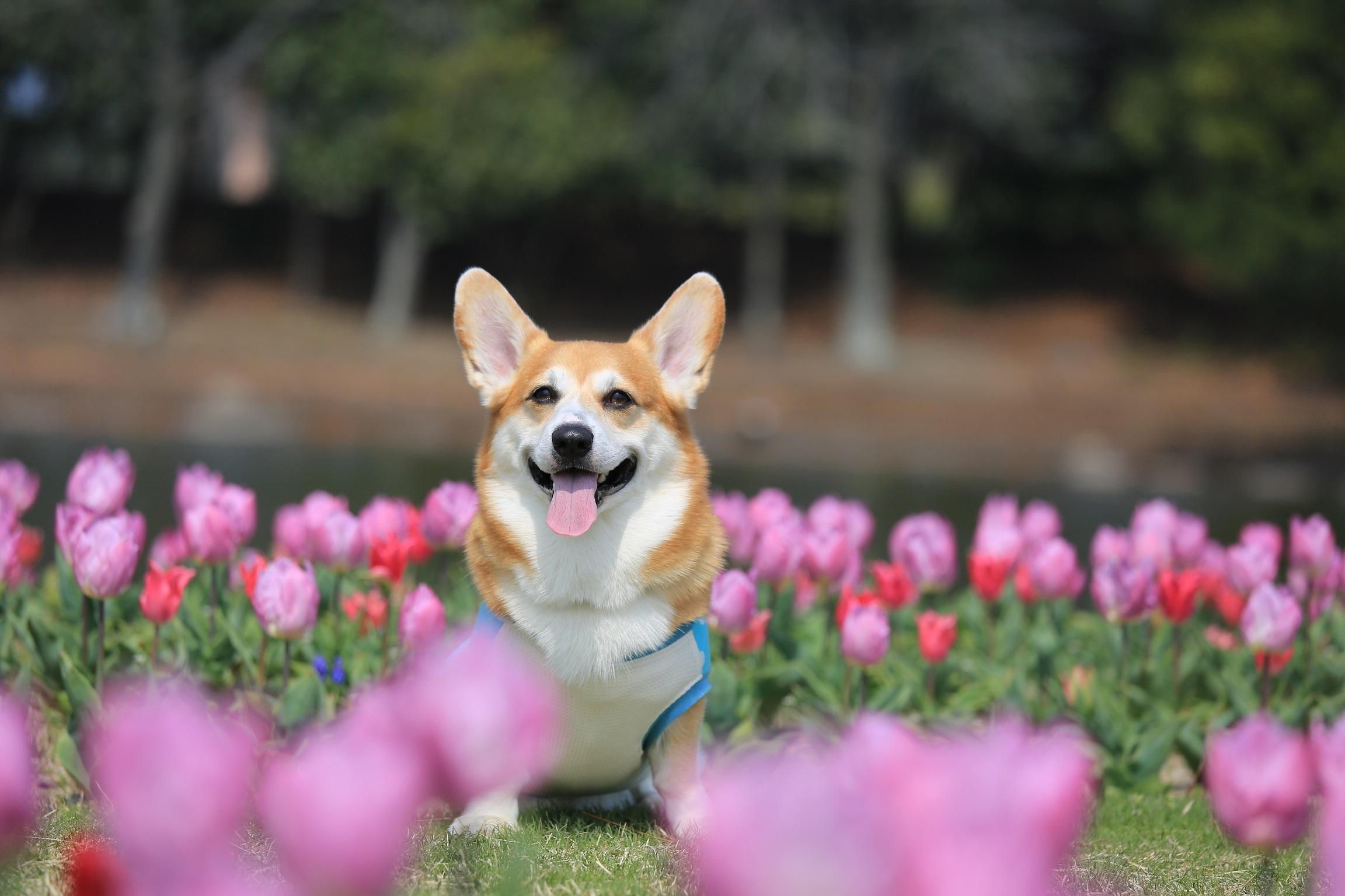 かわいいお花や植物、愛犬と写真撮影する時は気を付けて!誤食すると非常に危険!