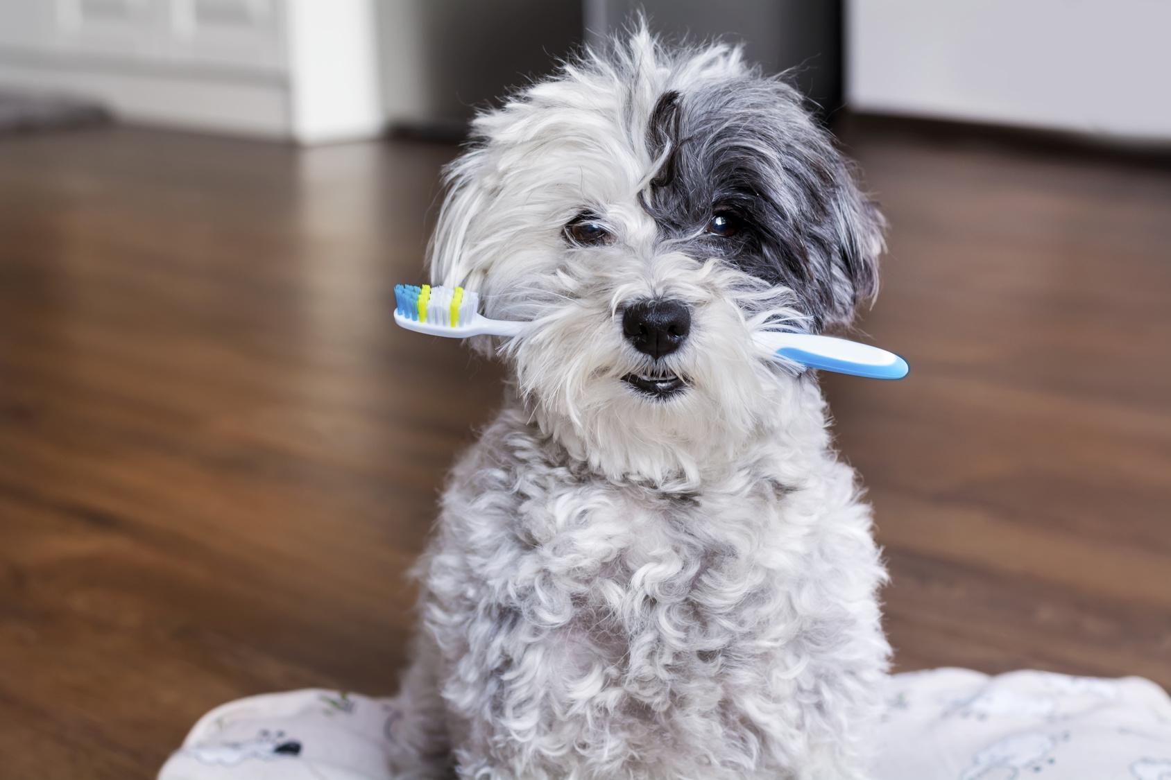 4月18日は良い歯の日♪歯磨きを怠る事で心臓病になる危険性が!?