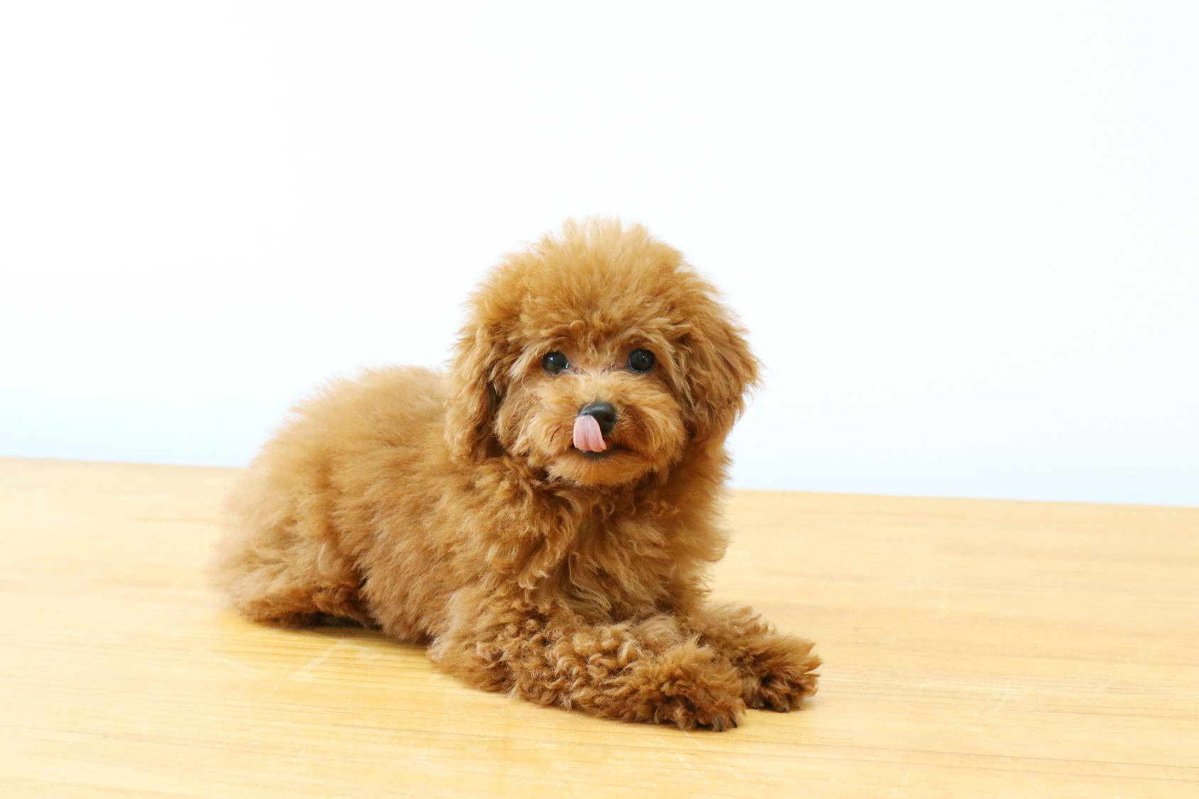 あなたの愛犬…知らず知らずのうちに分離不安症になっていませんか?