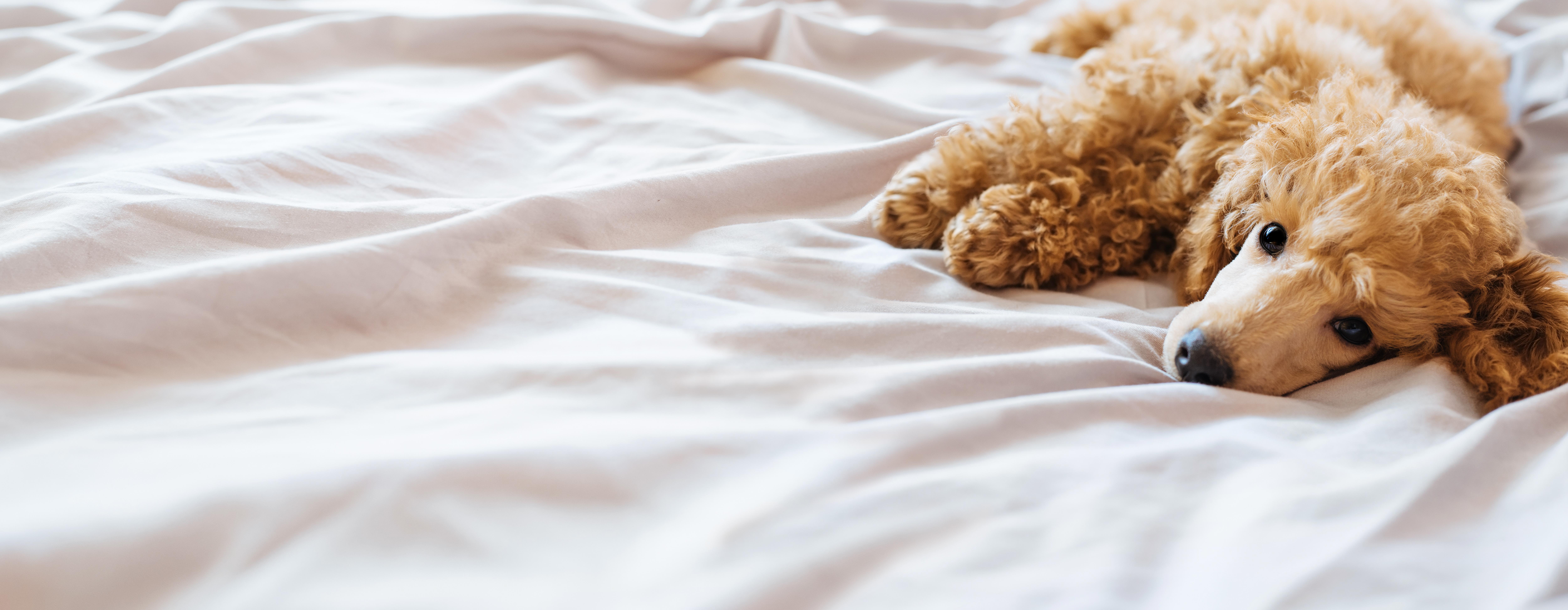 自宅で愛犬は安心して熟睡できていますか?安心しきっている時に見せる寝相とは?