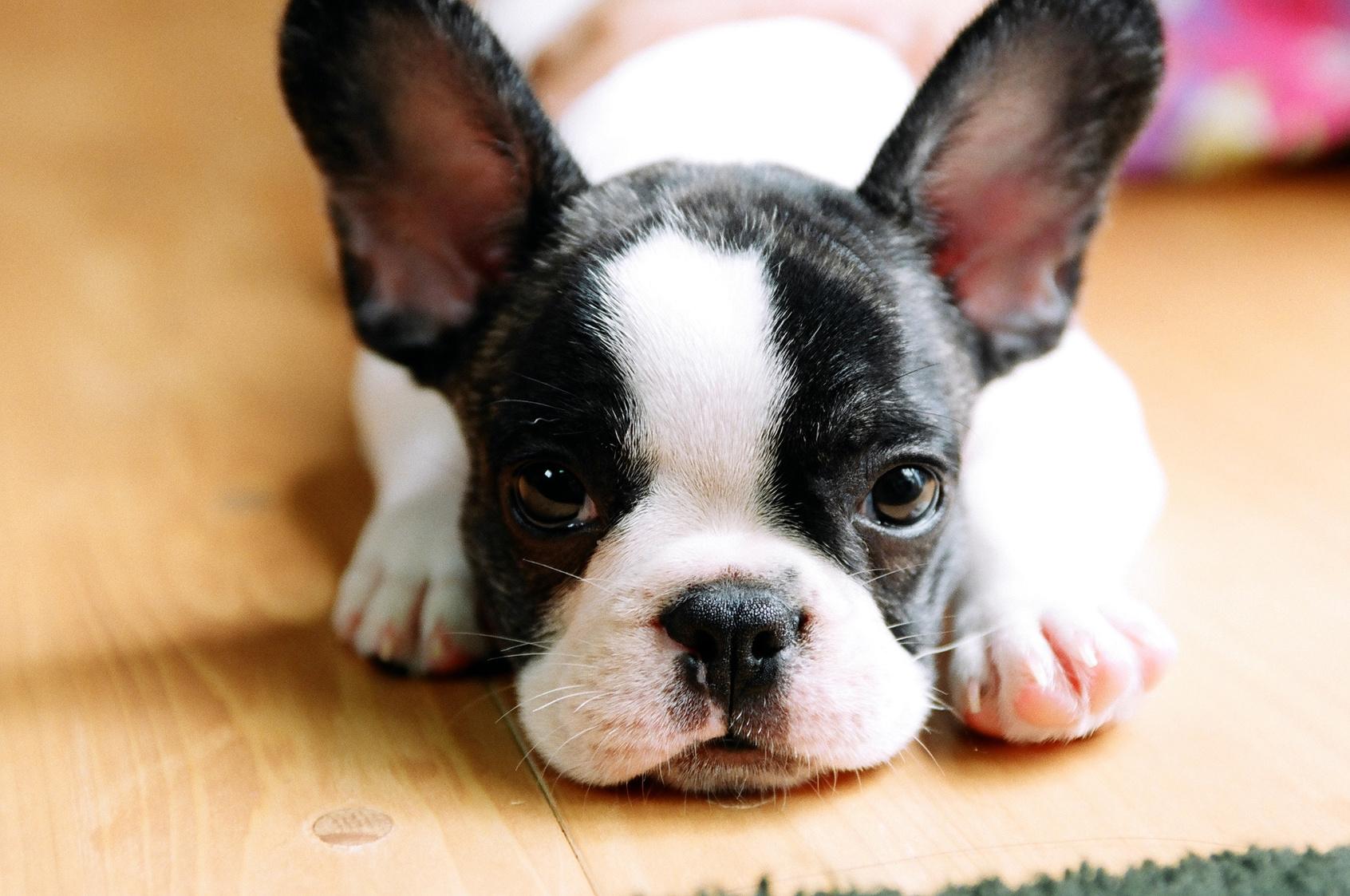 犬のフィラリア症。命取りにも繋がる恐ろしい病気の正しい予防法とは?