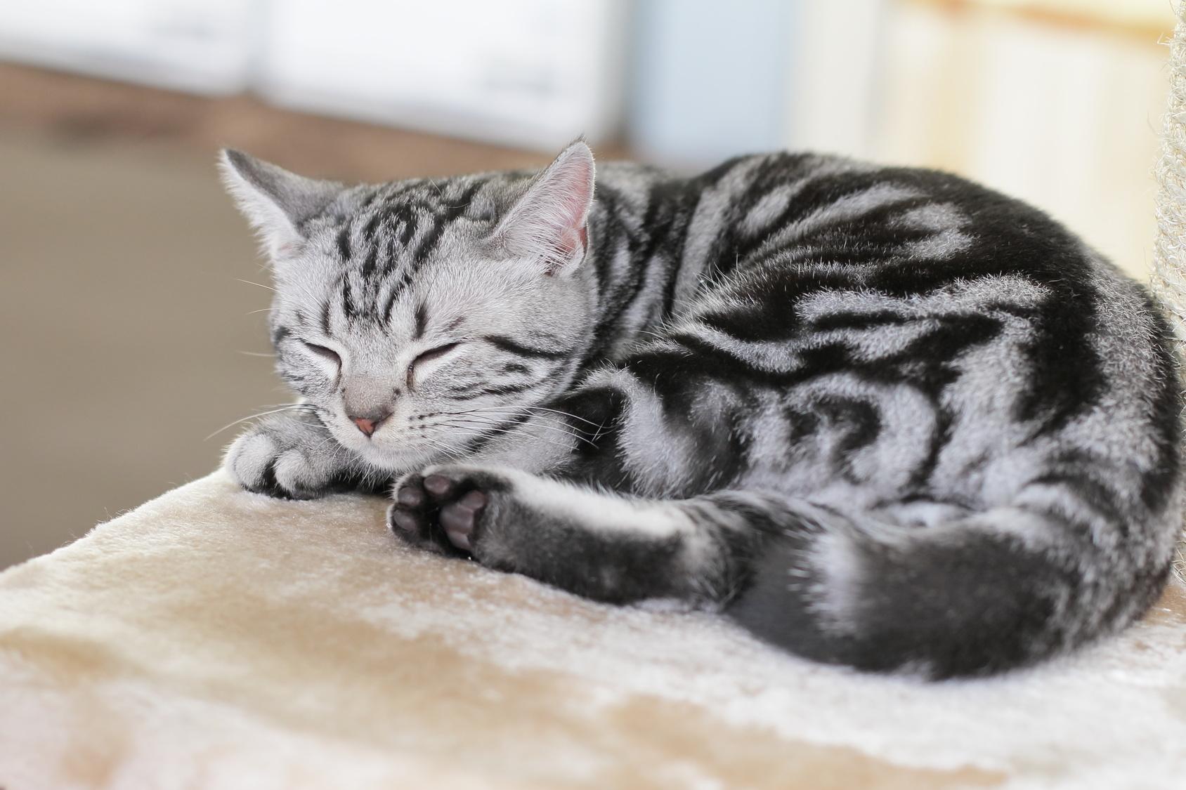 猫だって分離不安症になることもある?!猫の分離不安の症状とは?