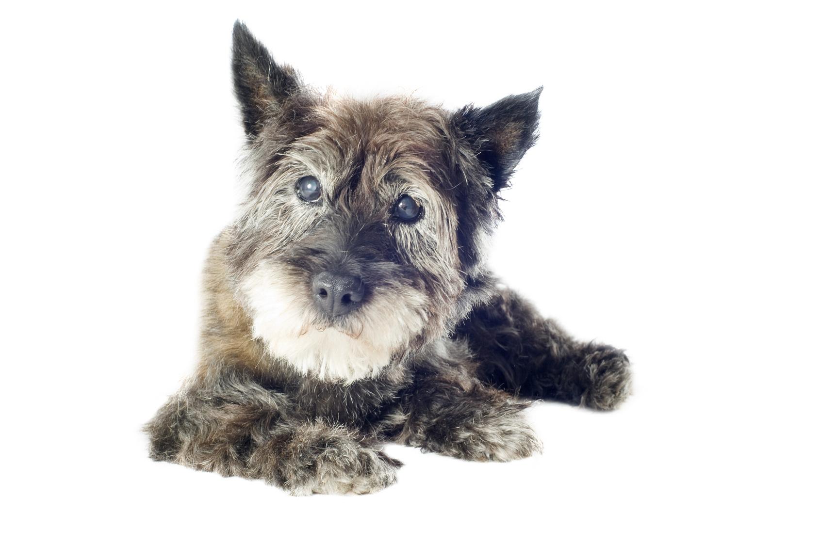 犬や猫の目が白い気がする。これって白内障!?