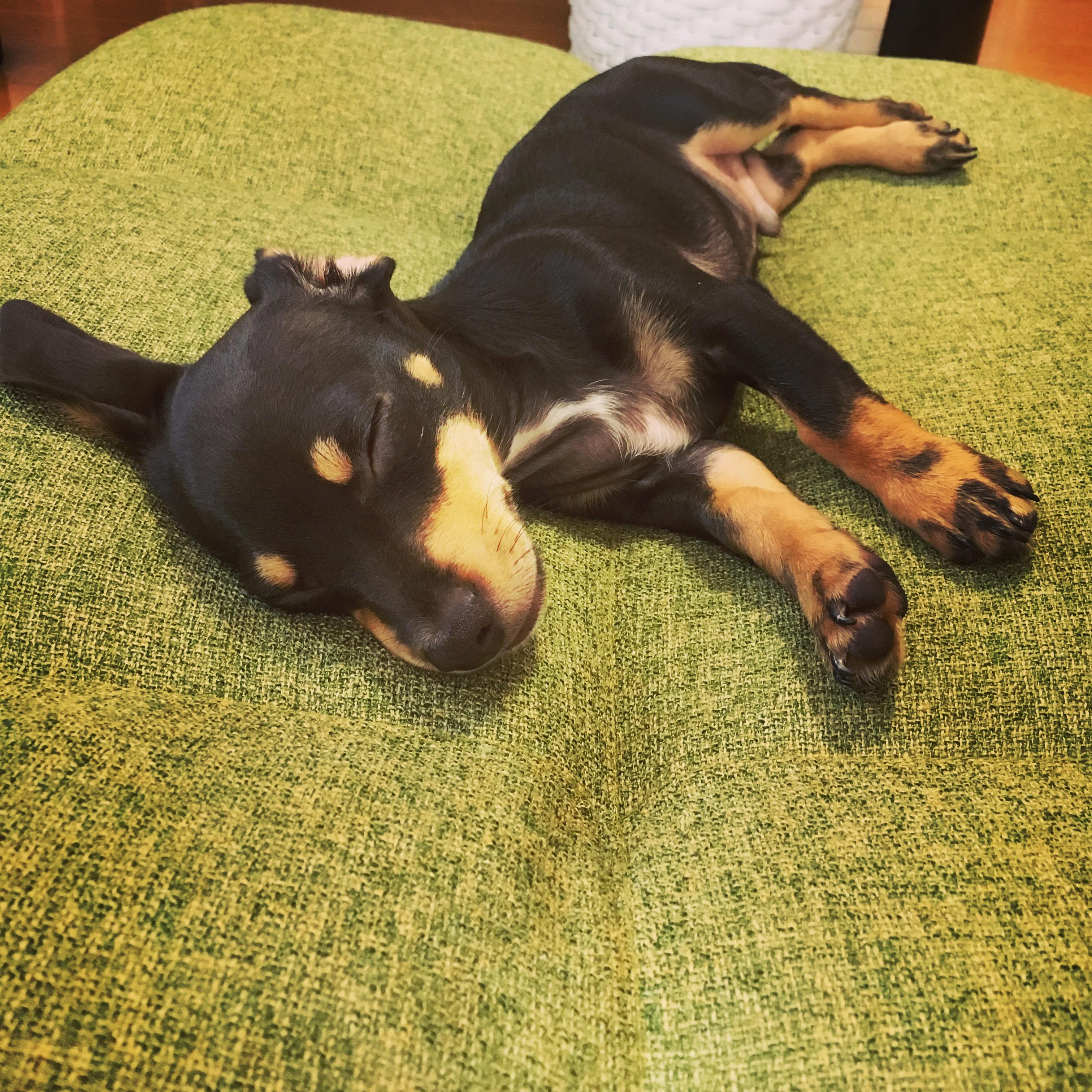 愛犬と一緒に寝るメリットとデメリット
