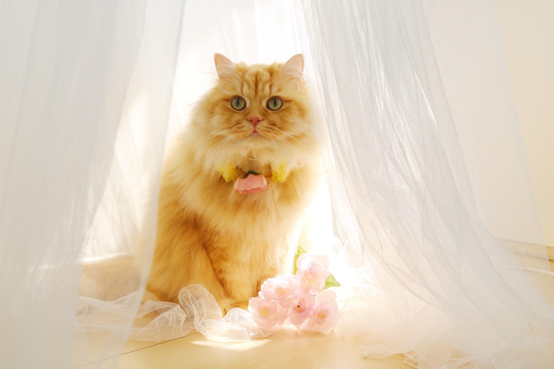 猫と暮らす10のメリット