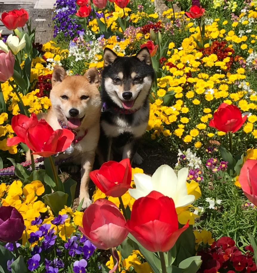 GW(ゴールデンウィーク)に愛犬と一緒に旅行に行きたい!日光編