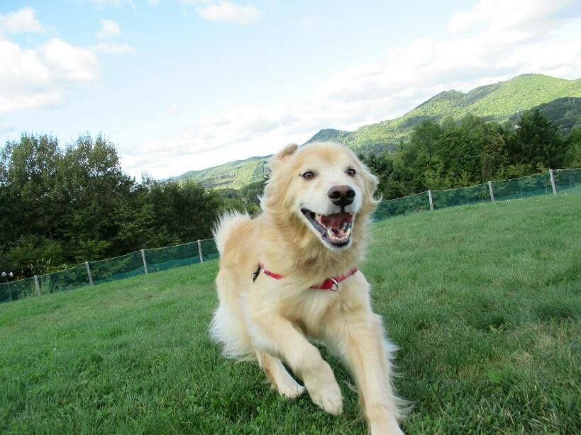GW(ゴールデンウィーク)は福島に行こう。愛犬のためのお出かけスポット、エンゼルフォレスト