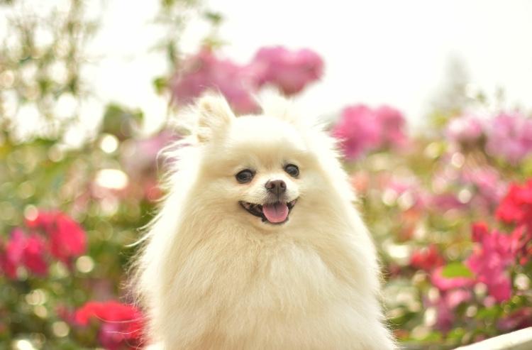 5月13日は愛犬の日♪11月の犬の日とはちょっと違う愛犬の日とは?