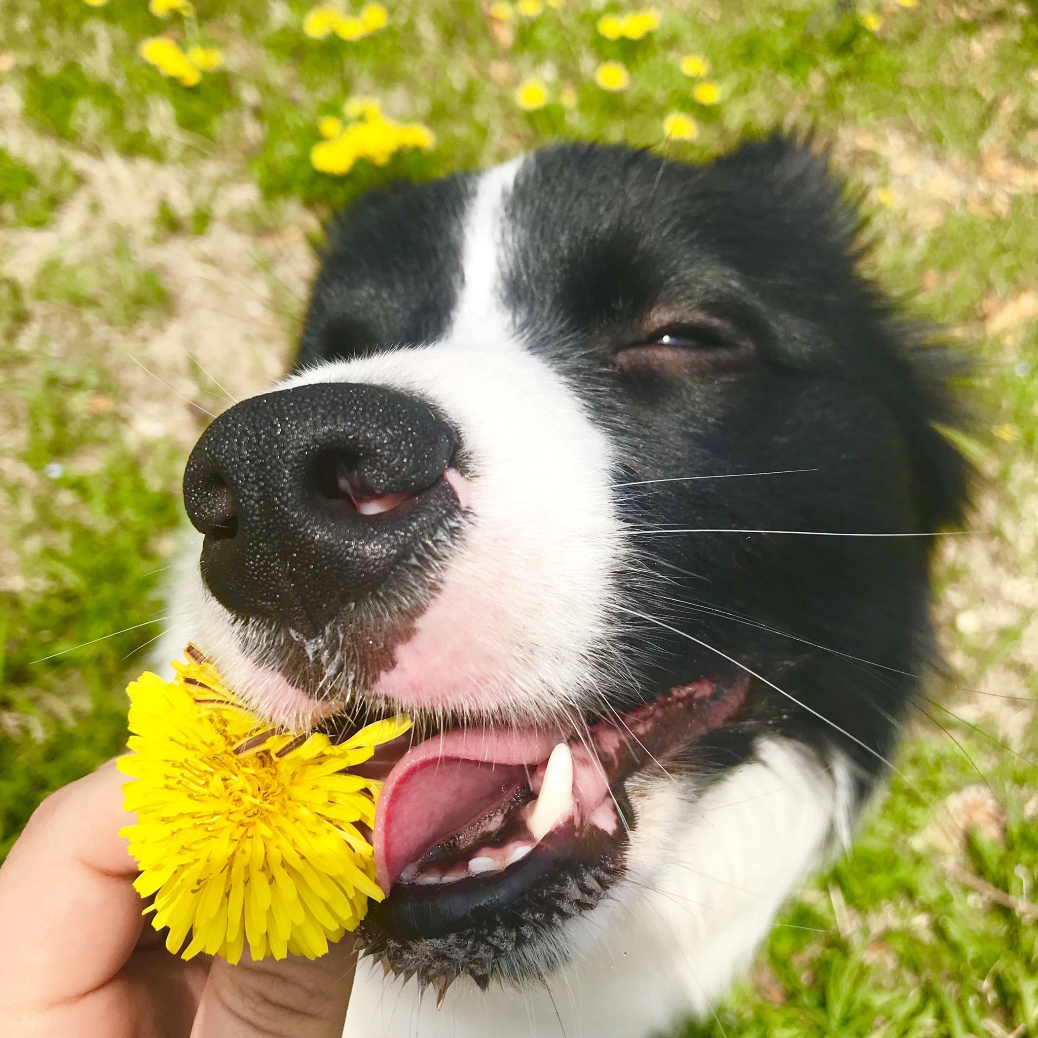 天候を気にせず愛犬と遊びたい!千葉県のイオンPET MALL幕張新都心は、1日中楽しめるお出かけスポット♪【前編】