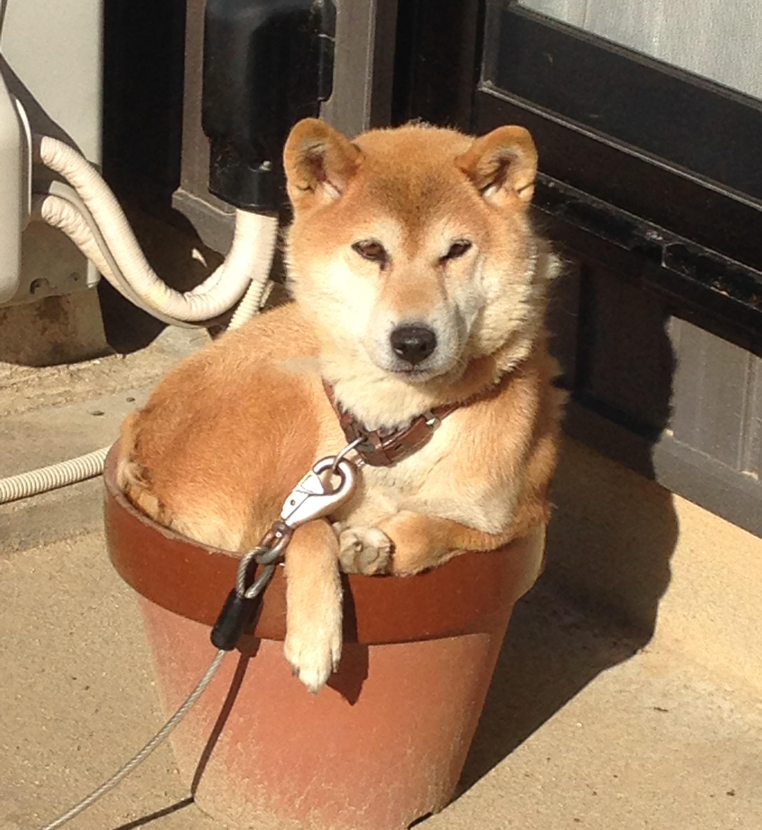 犬は地震を予知できる?!地震前に見られる犬の行動