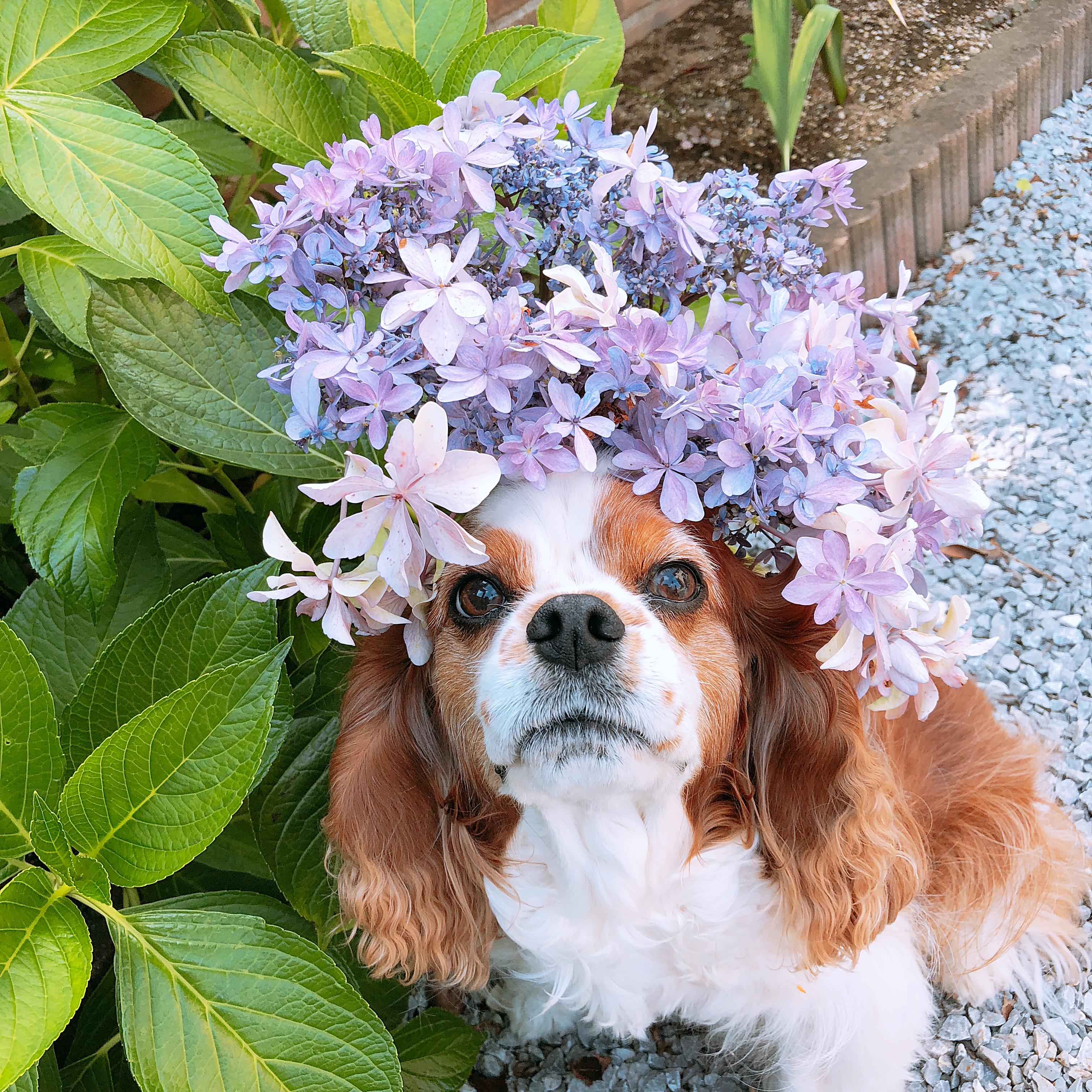 今が見頃♪千葉県茂原市にあるあじさい屋敷に愛犬と一緒におでかけしよう!