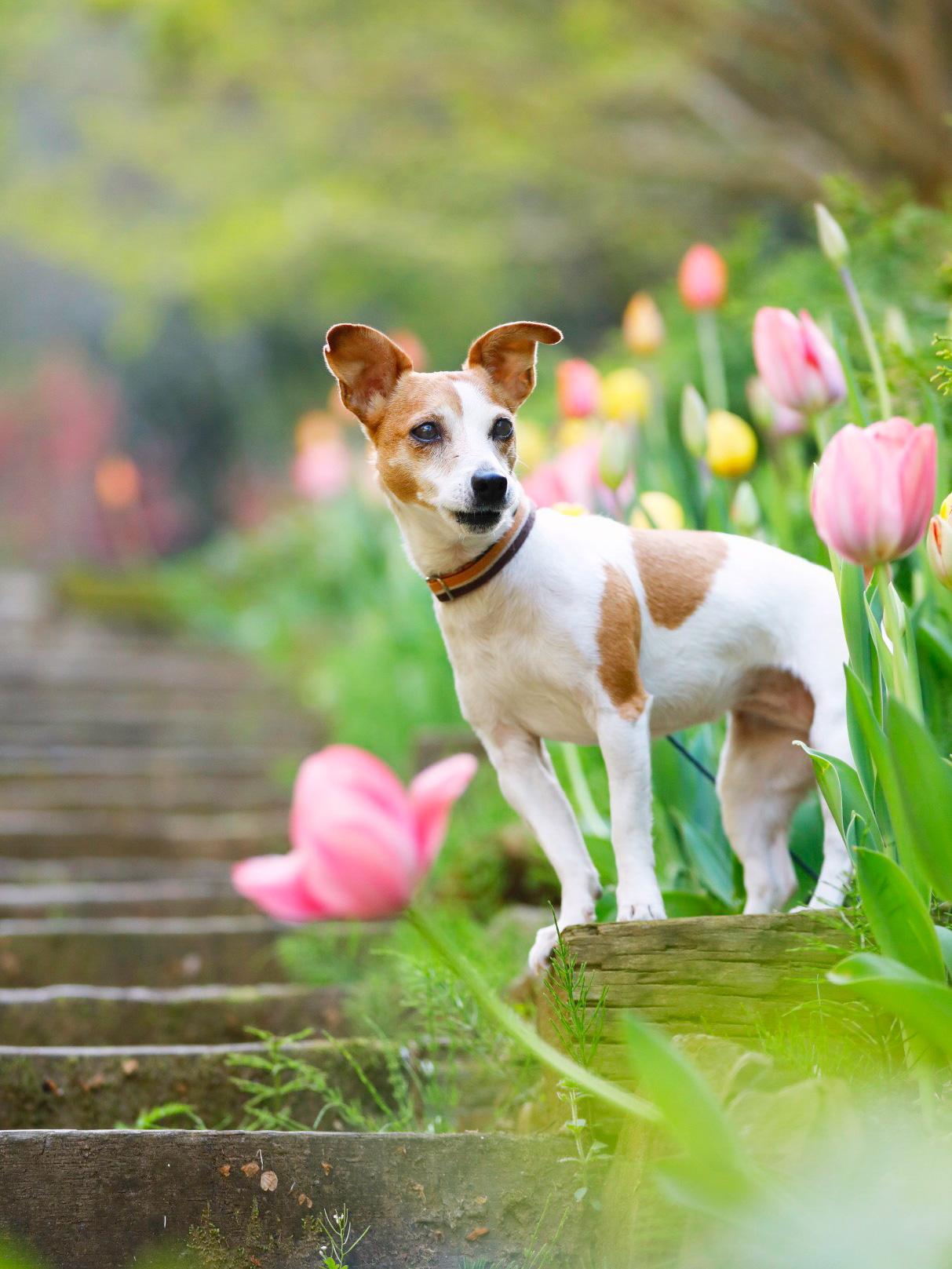 犬と暮らすためには、年間いくらかかるか知っていますか?【年間費用平均】