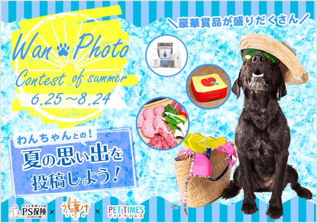 わんフォトコンテスト!Summer☆エントリー開始です!