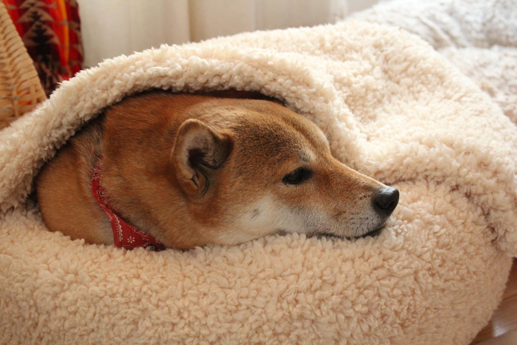 えっ!?犬にも食中毒ってあるの?梅雨時期には気を付けたい犬の食中毒
