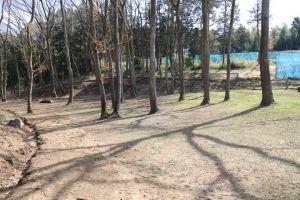 「自然ラン」は中型犬・大型犬優先の自然に囲まれたドッグラン
