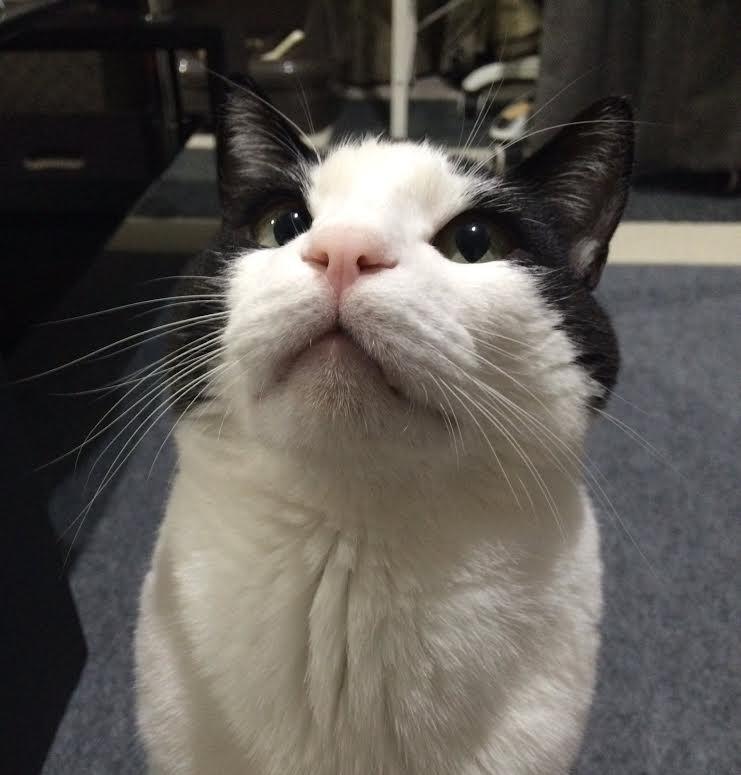 猫にもニキビができるんです。愛猫のあごをチェックしてみよう