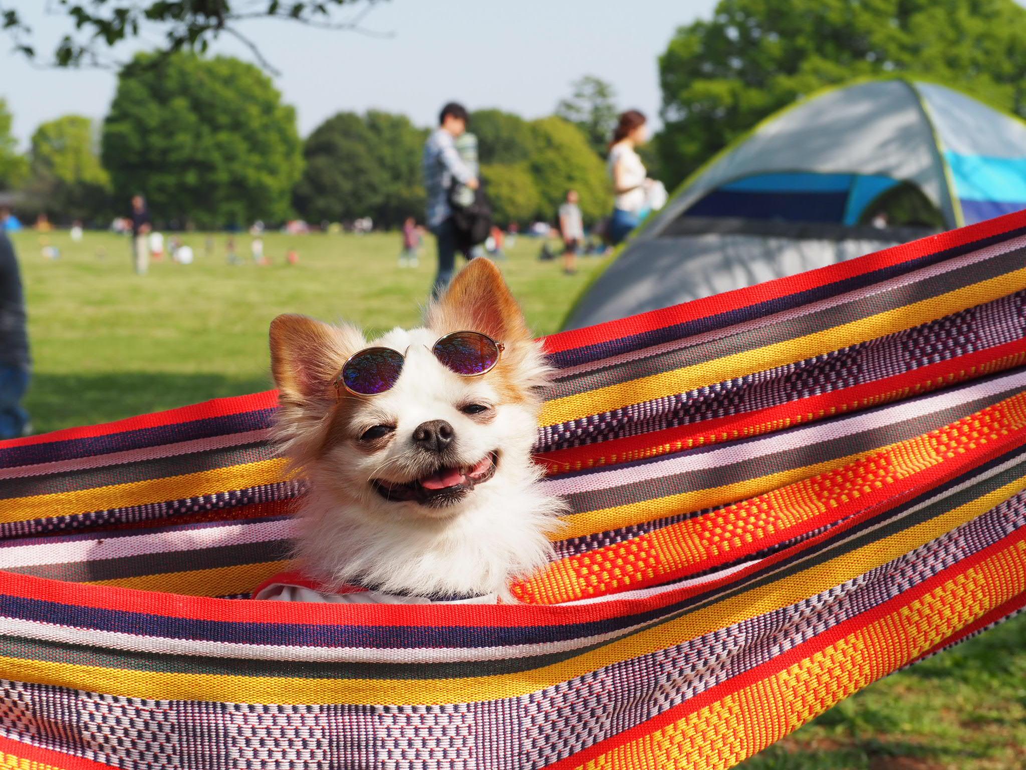 愛犬が熱中症にならないための予防法6選