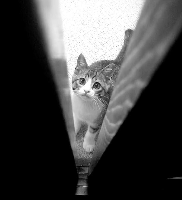 ペットショップへ行く前に保護猫のことを考えてみませんか