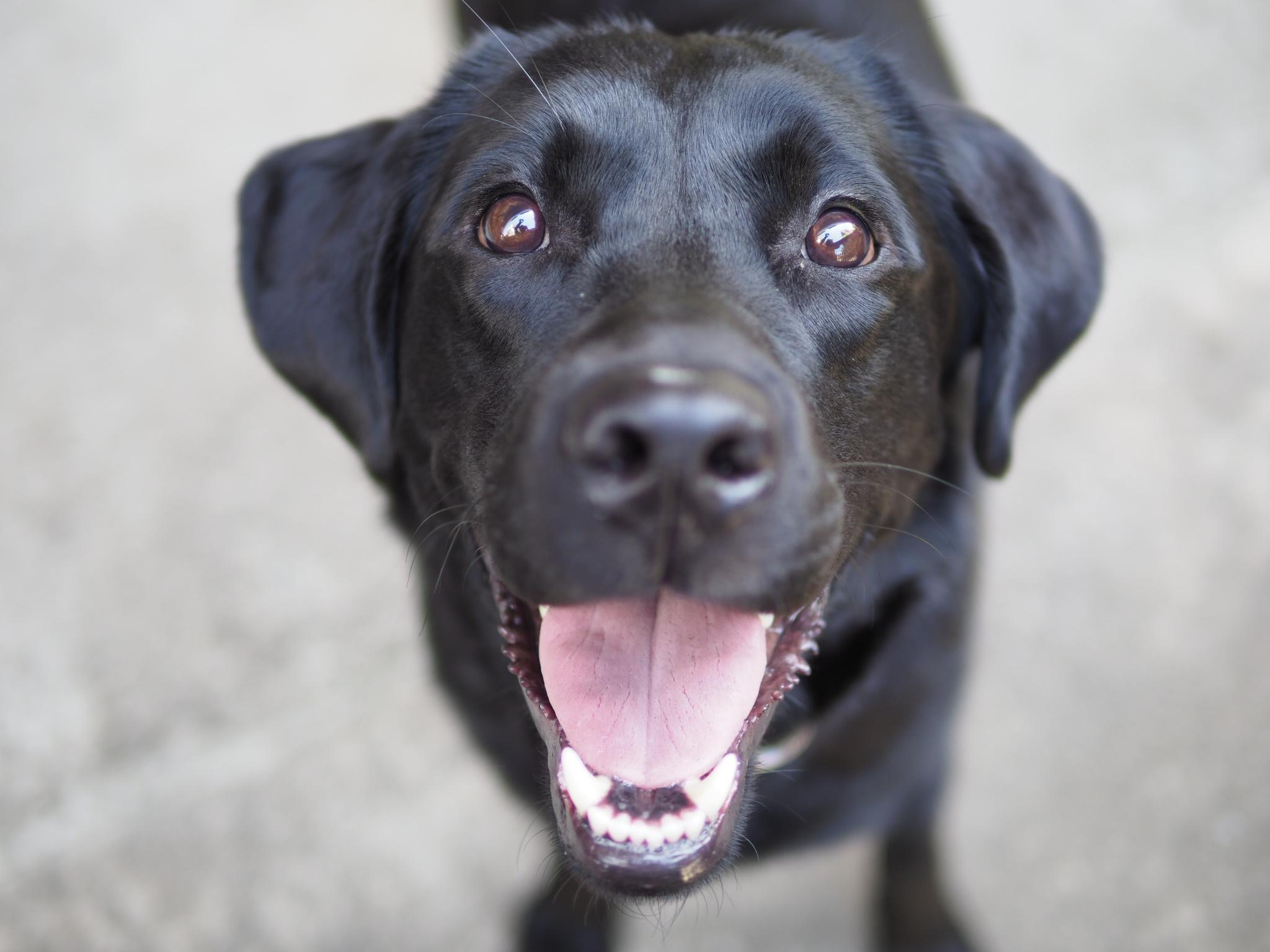 花火大会に愛犬を連れて行かないで!花火の音を犬が怖がるのはこんな理由