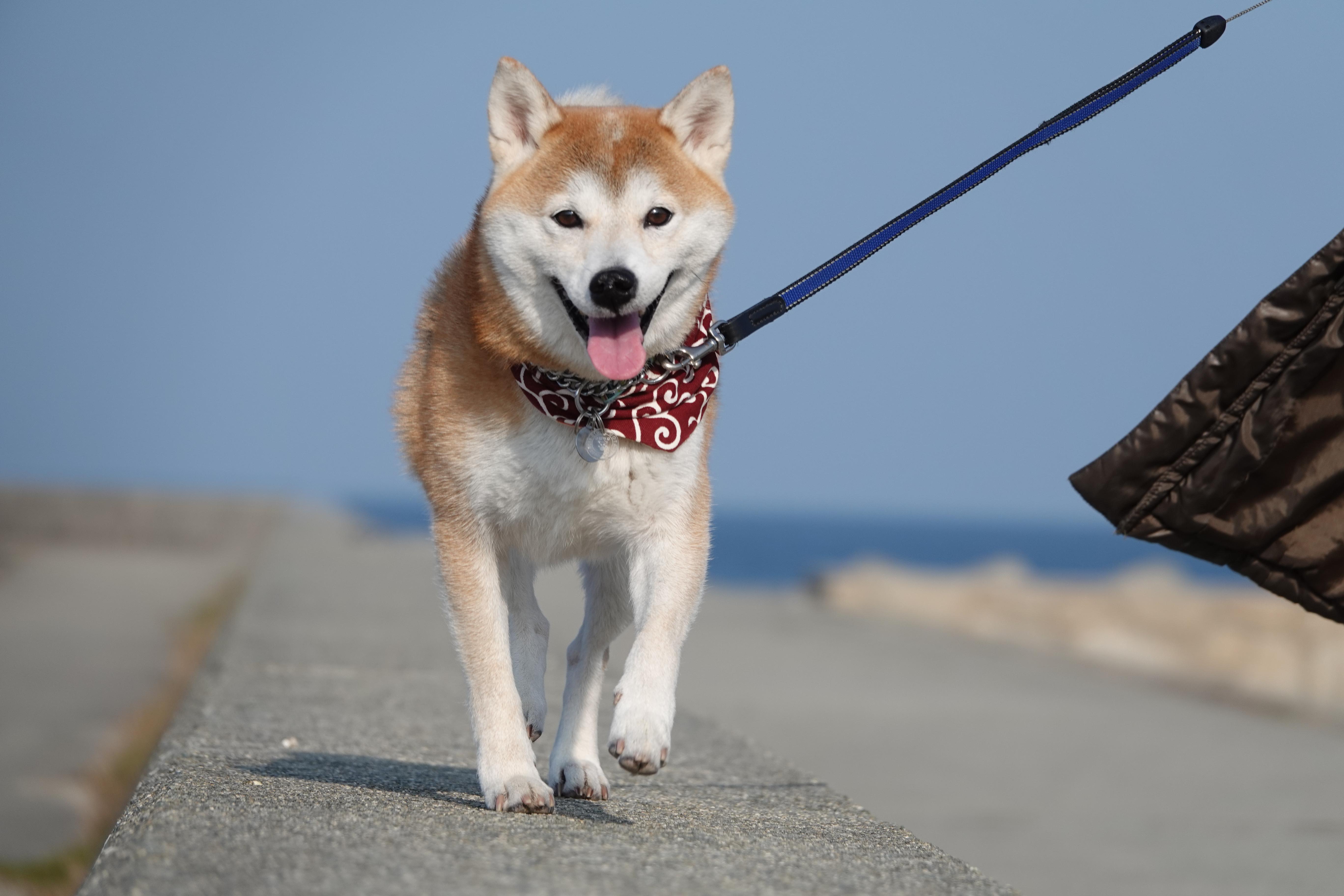 愛犬と一緒に海に行きたい!愛犬と行ける千葉県の海水浴場5選