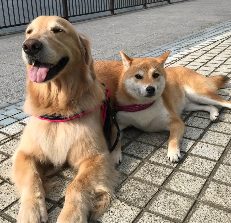 小型犬に比べて大型犬の寿命が短いのはなぜ?