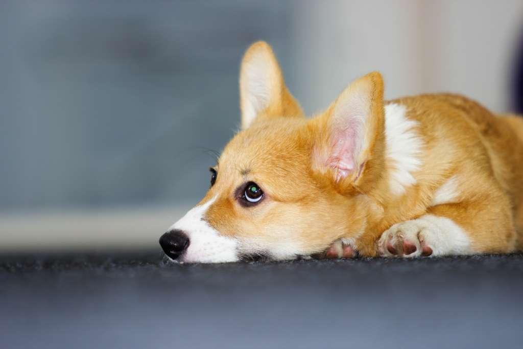犬が不満やストレスを感じているため息