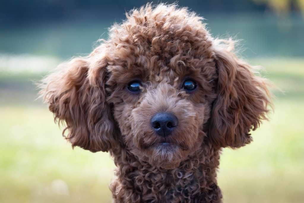 犬がお尻を向けるのは愛情表現