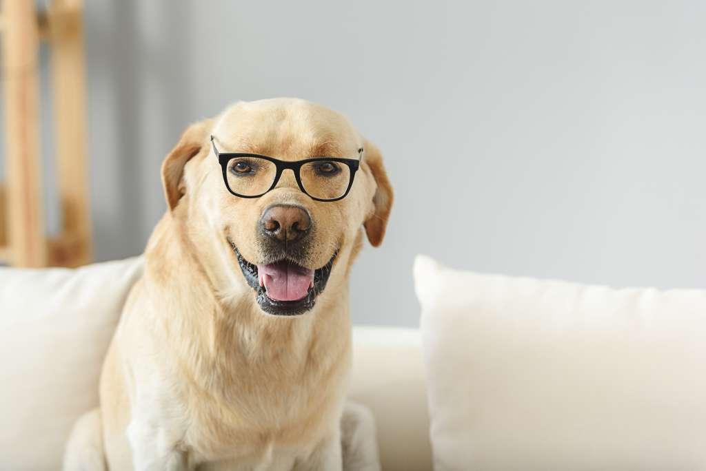 犬は視力が弱く、背後に迫る動物に対し、見えない恐怖からおびえたり、警戒したりする習性