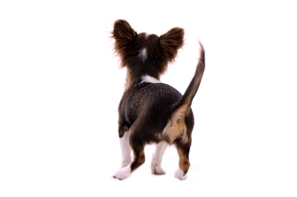 【犬の気持ち】愛犬が飼い主にお尻を向ける、お尻をくっ付けるのはどうして?