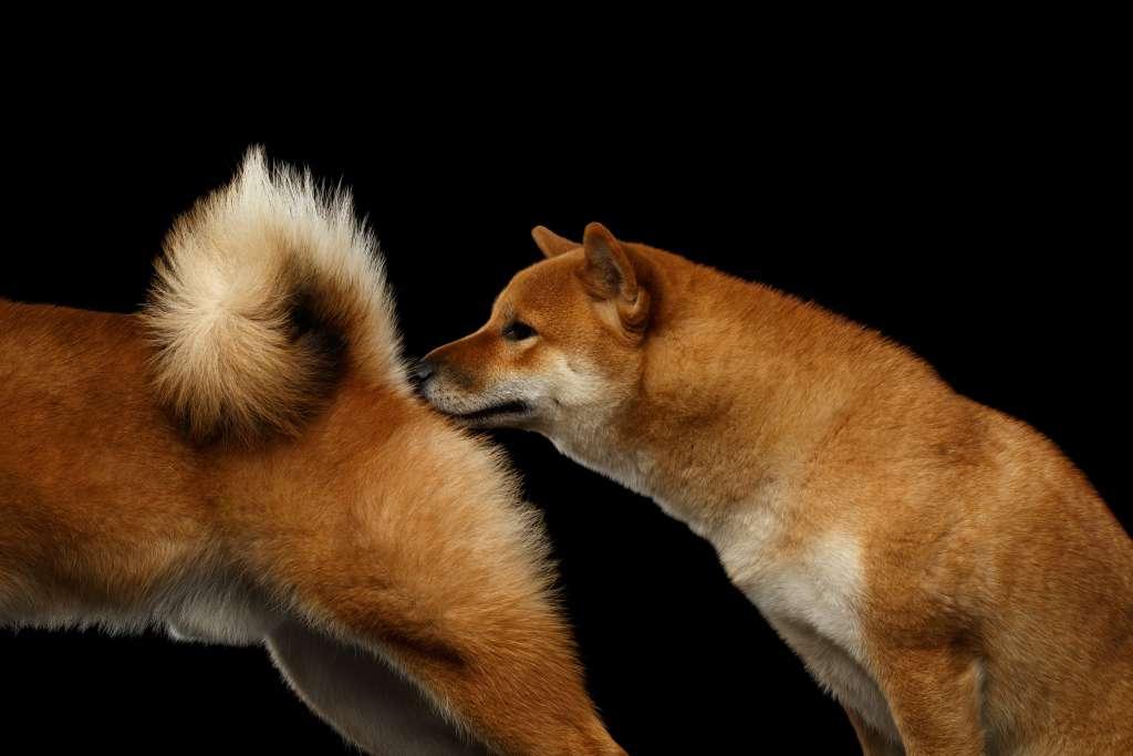 犬のお尻は個人情報の交換であり、あいさつをするための大事な部位