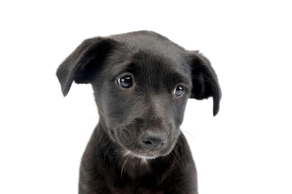 【犬の気持ち】犬がため息をつく理由とその意味