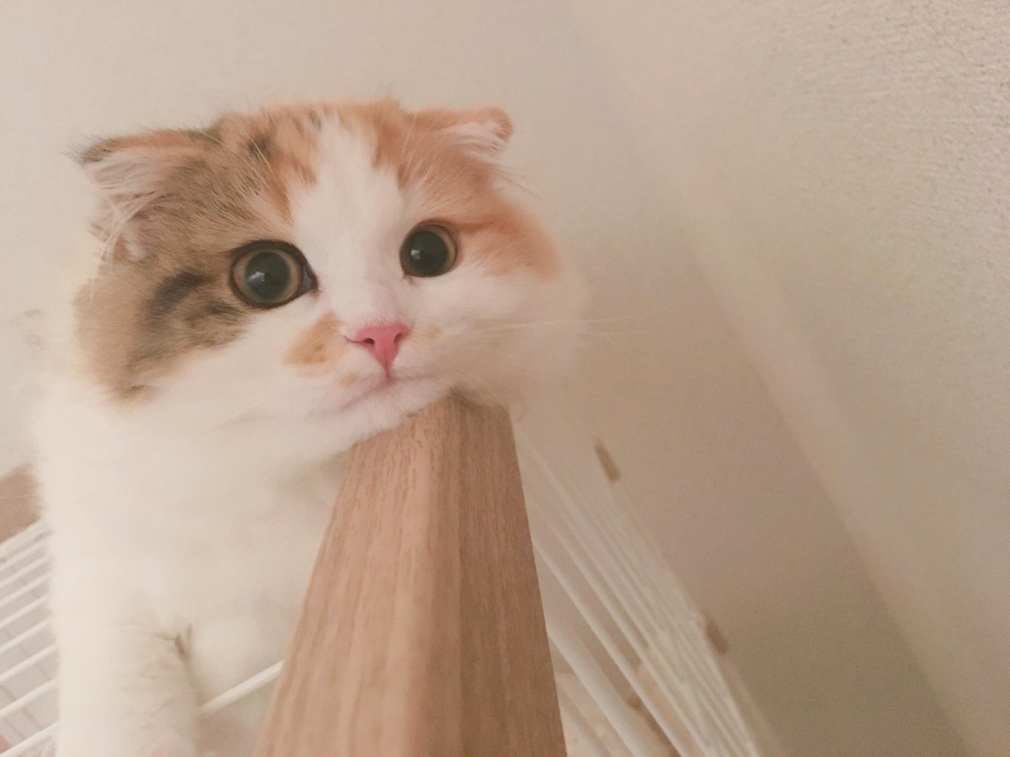 猫の年齢を人に換算してみよう。あなたの愛猫は今何歳?