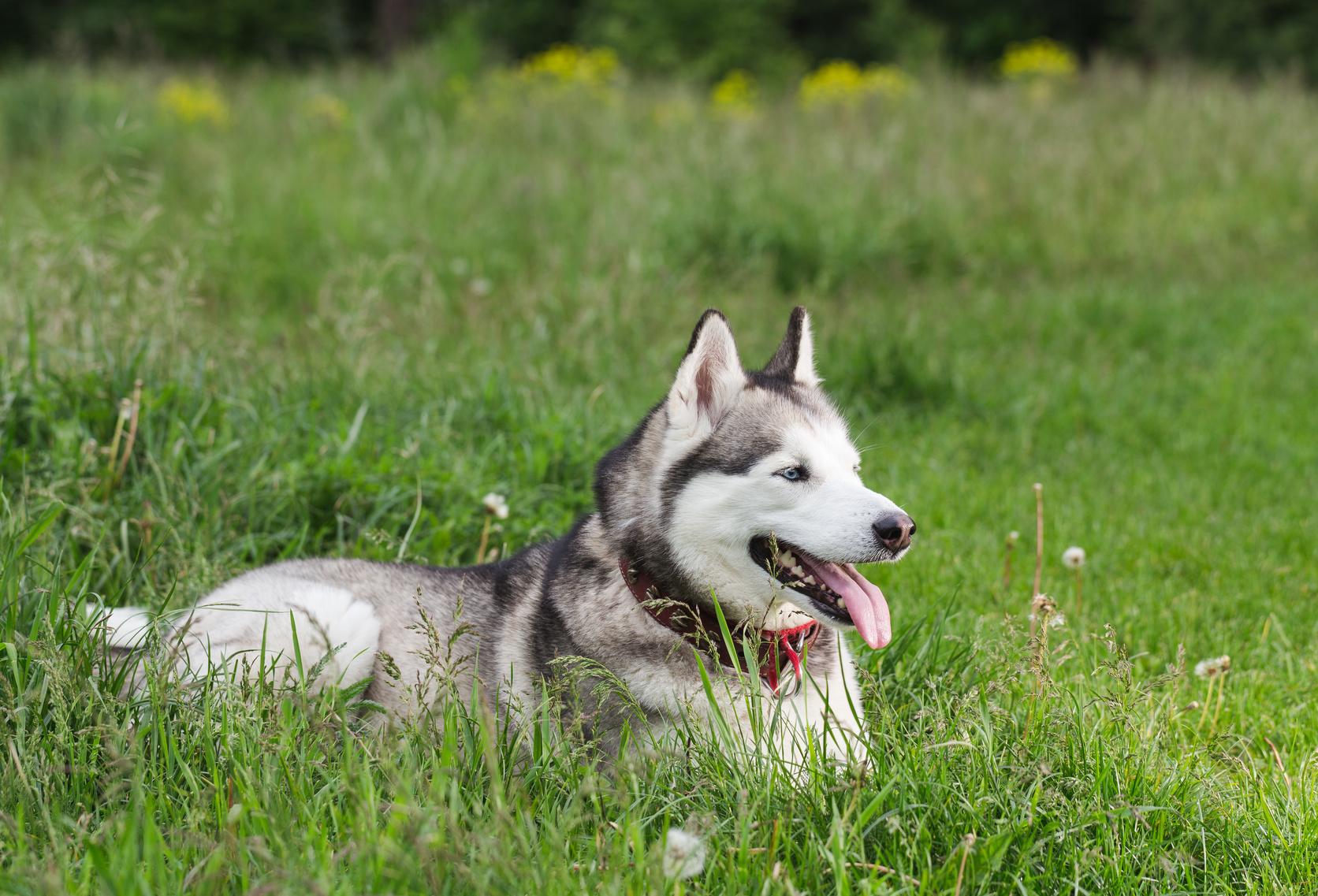 犬の年齢を人に換算してみよう。あなたの愛犬は今何歳?
