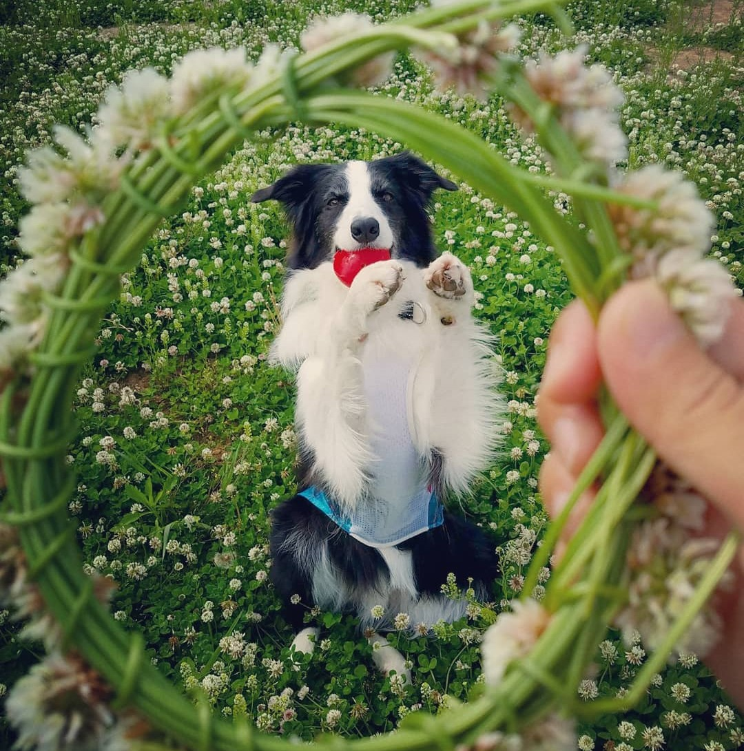 愛犬と楽しく散歩したい!お散歩マスターになるためのしつけグッズ!