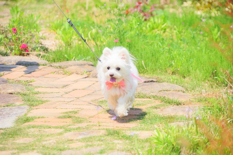 【兵庫県のおすすめおでかけスポット】愛犬と期間限定ドッグランが楽しめる六甲山カンツリーハウスに行こう!