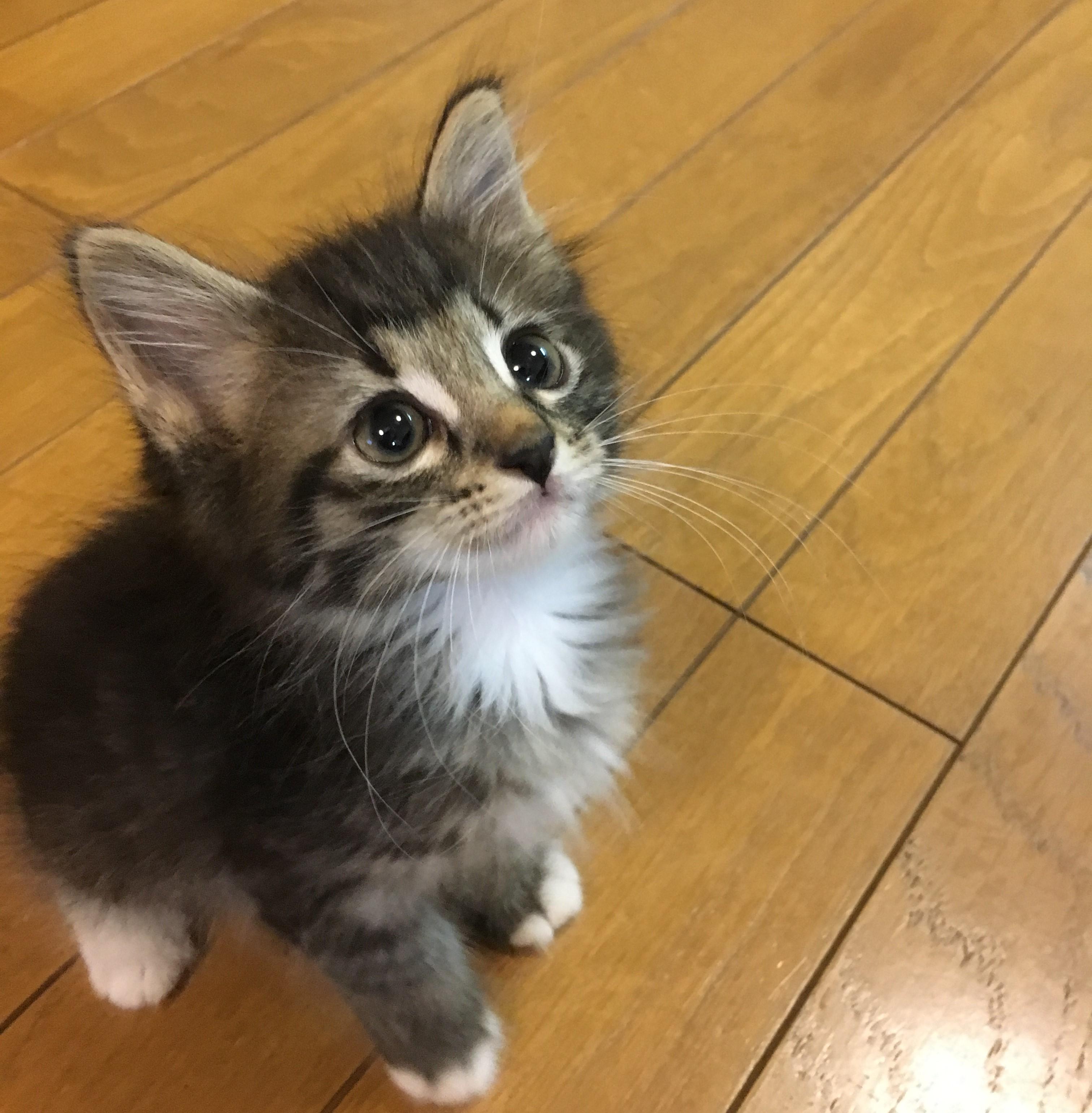 8月8日は世界猫の日♪猫の日限定グッズをご紹介!