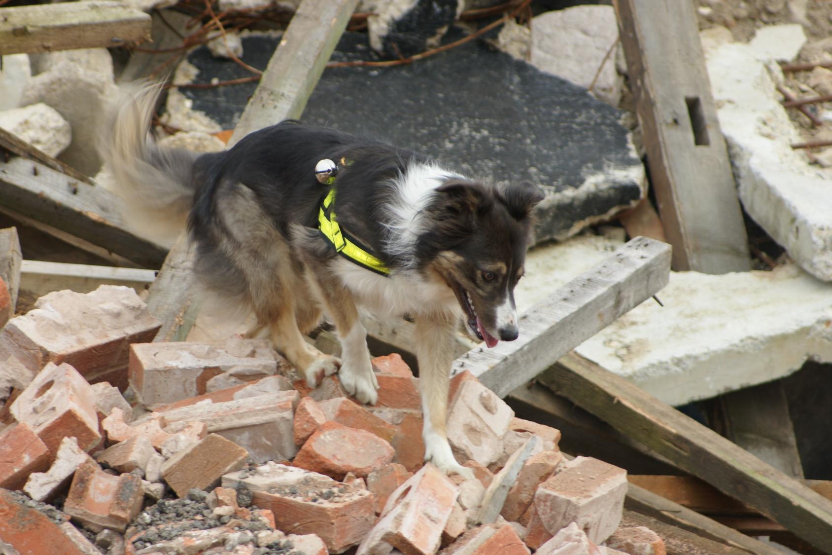 9月1日は防災の日。愛犬と避難するために備えておくべきグッズ